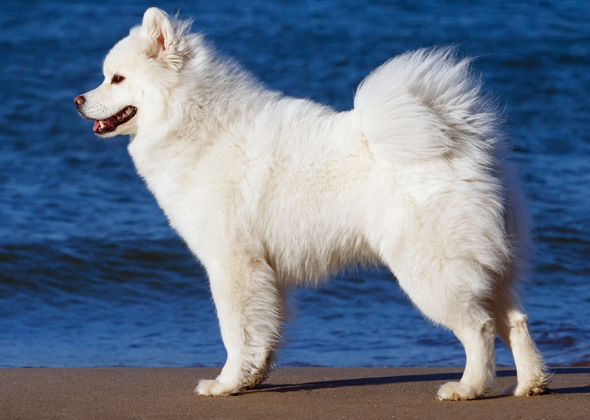 Quiz: Match the Tail to the Dog Breed