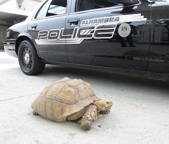 Clark was picked up by police after he was found roaming the streets in Alhambra, California.