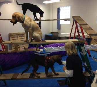 Penn Vet Working Dog Center three dogs training on ladders