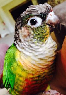 Figgie the Bird