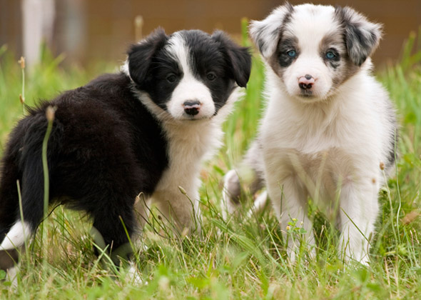 10 Most Dog-Friendly Dog Breeds