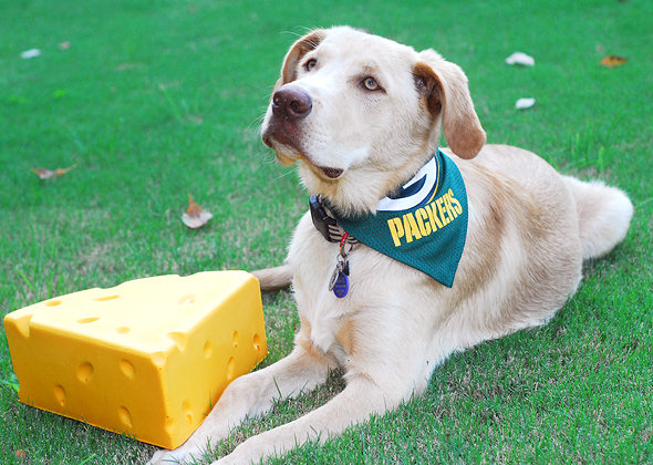 Cosmo dressed as a Green Bay Packer