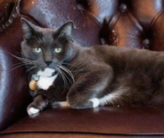 Oreo is a well-known, longtime resident of Colorado's Armstrong Hotel.