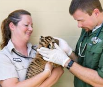 "Three Malayan tiger cubs appear in the premiere of ""The Wildlife Docs."""