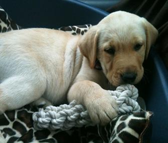 Liam Payne Puppy