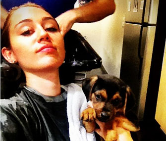 "Miley Cyrus tweeted this photo of herself getting ""groomed"" with Happy."