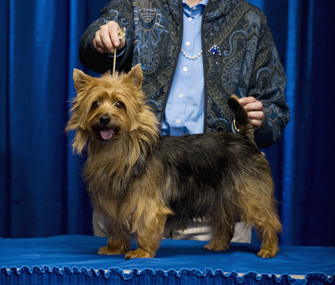Handler with dog at dog show
