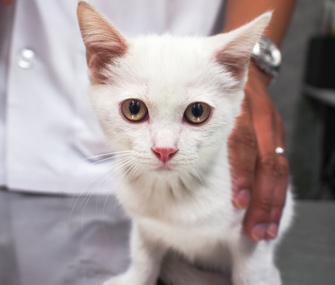 Cat at vet's office