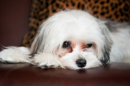 Sad puppy divorce