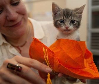 Nearly 300 kittens have graduated from the ASPCA's new kitten nursery during this year's kitten season.