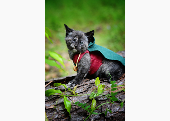 Wendy McKee kitten in Frodo costume