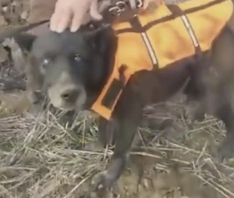 A blind dog was named Christmas by rescuers who saved him from a well in Bosnia.