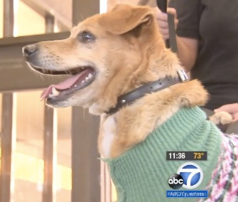 A week after he was dramatically saved from the Los Angeles River, Lucky the dog was adopted by the woman who spotted him struggling in the water.