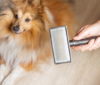 Brushing furry dog