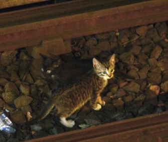 One of the two kittens scampers away from authorities on a New York subway track.