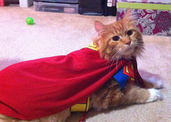Cat as Superman