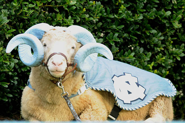 Rameses XVIII, The University of North Carolina at Chapel Hill
