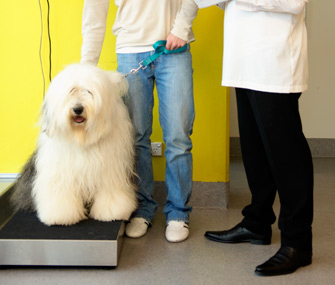 Dog on Scale With Vet