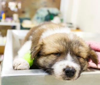 Puppy at Vet ER