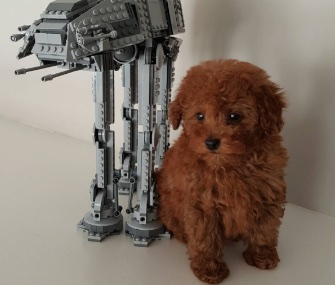 Nine-year-old actor Jacob Tremblay named his puppy Rey after the heroine in Star Wars.