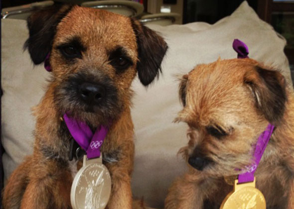 Andy Murray's dogs Maggie May and Rusty wear his Olympic medals