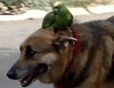 Parrot and dog