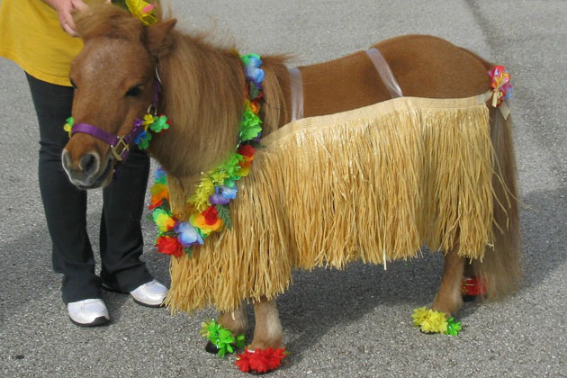 1. Bon-Bon the Mini Horse as a Hula Dancer