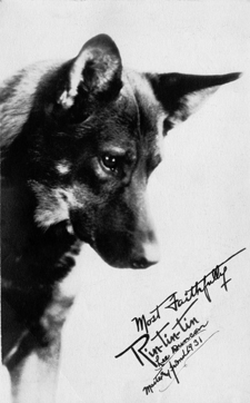 Photo signed by Rin Tin Tin