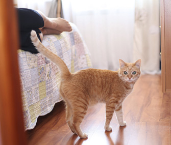 Cat near bed