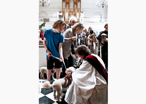 St. Luke's Blessing of the Animals
