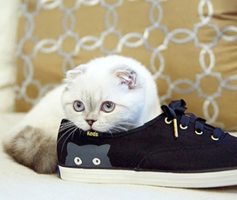 Taylor Swift's kitten Olivia Benson poses in an ad for Swift's special edition Keds.