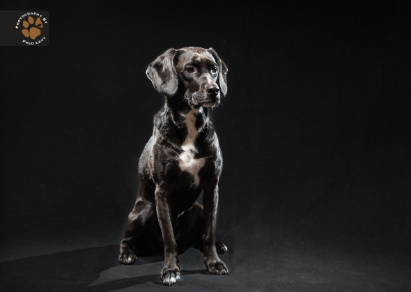 Lexi, Black Dogs Project by Fred Levy