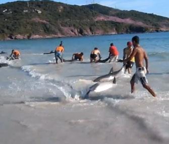 beachgoers save dolphin