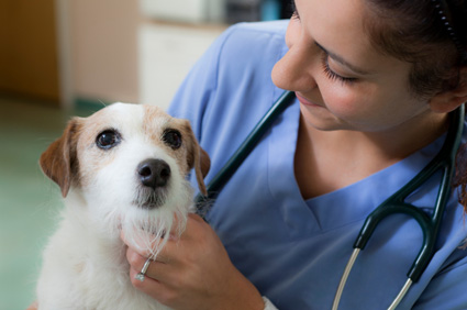 happy pet with veterinarian