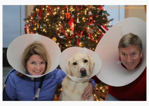 Family wearing cones of shame