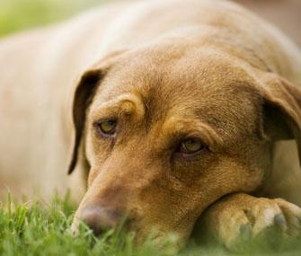 Queasy Dog
