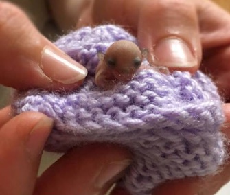 An orphaned glider joey is getting 24/7 care at an Australian wildlife hospital.