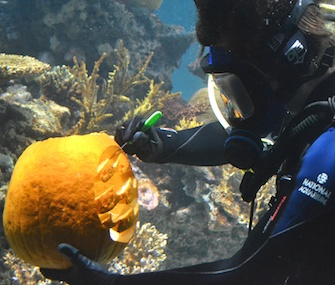 Aquarist Emily Anderson carves the National Aquarium's logo into a pumpkin while underwater.