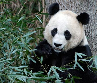Mei Xiang, here in a file photo, sadly lost her young cub on Sunday.