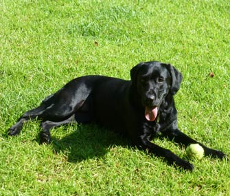 Raylene the Hearing Assistance Dog