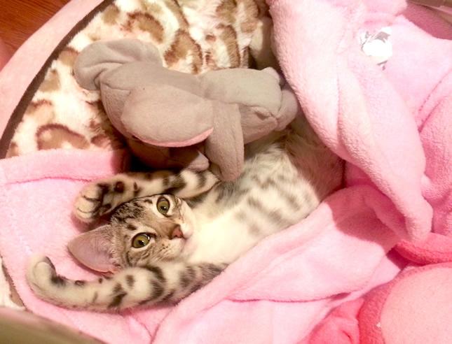 cute cat in blanket