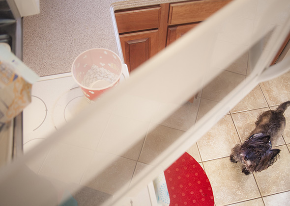 Things in the Home That Scare Pets Popcorn