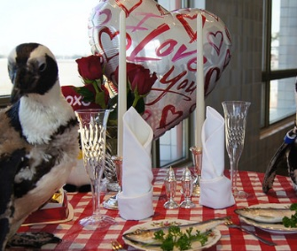 Penguin sweethearts Kohl and Zela celebrated their 22nd Valentine's Day over a romantic fish dinner.