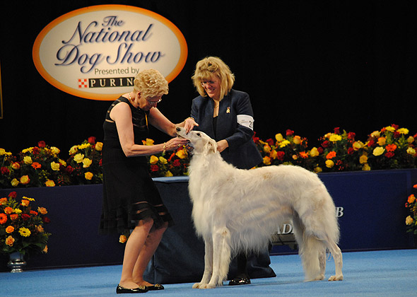 National Dog Show Borzoi