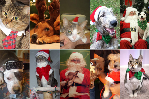 The Cutest Festive Pets in the World