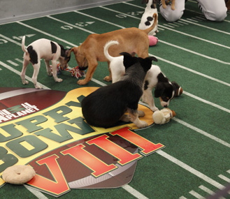 Puppy Bowl players in action