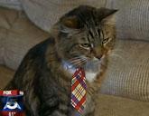 Hank the Cat interview