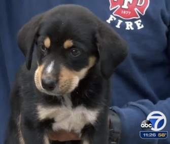 "Fresno, California, firefighters rescued a ""little troublemaker"" from an old well Tuesday."