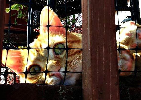 Cat sunning on deck.