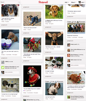 Dachshunds Pinterest Page